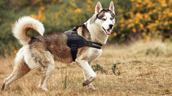 dog training commands