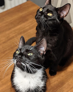 a black cat and a black-and-white cat sitting on the floor