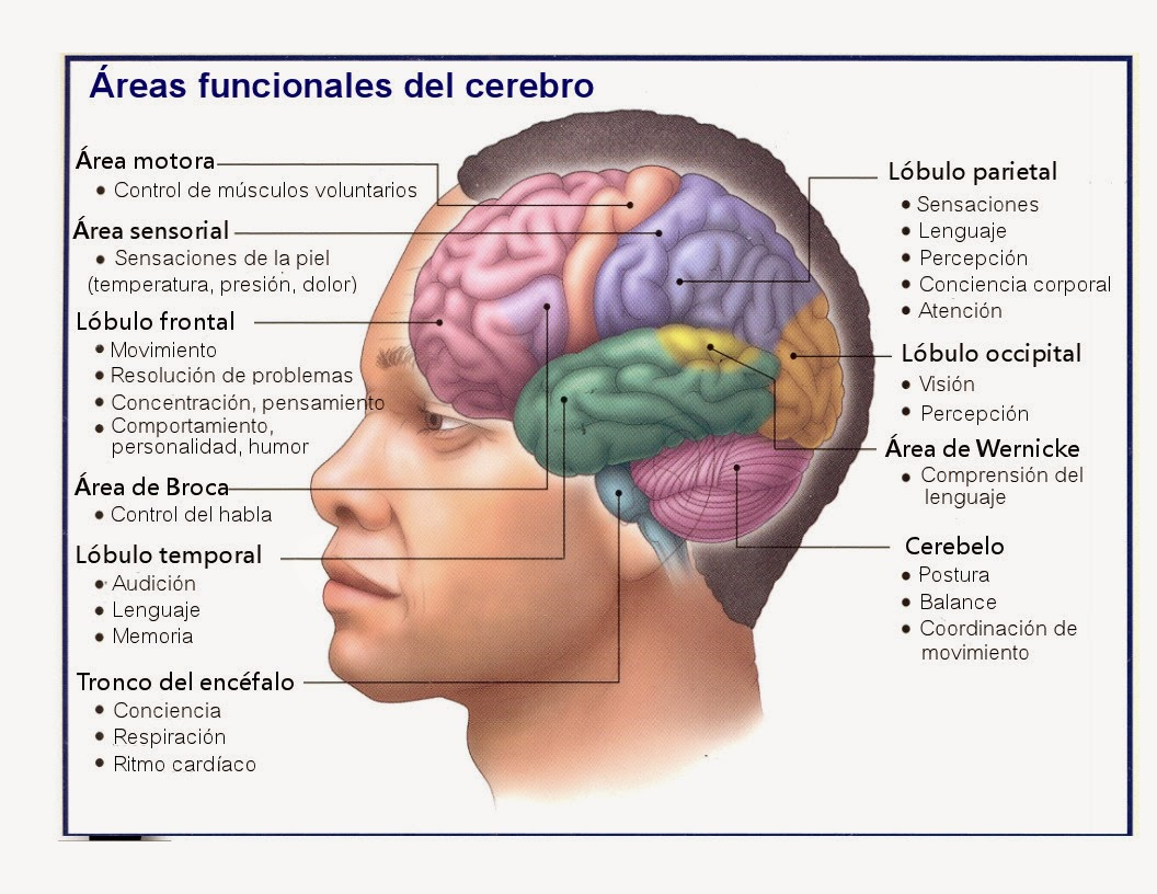 RAMAS DE LA NEUROLOGIA