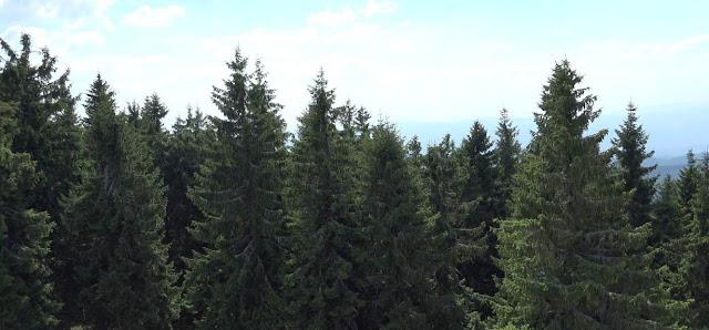 Bosques templados y naturaleza