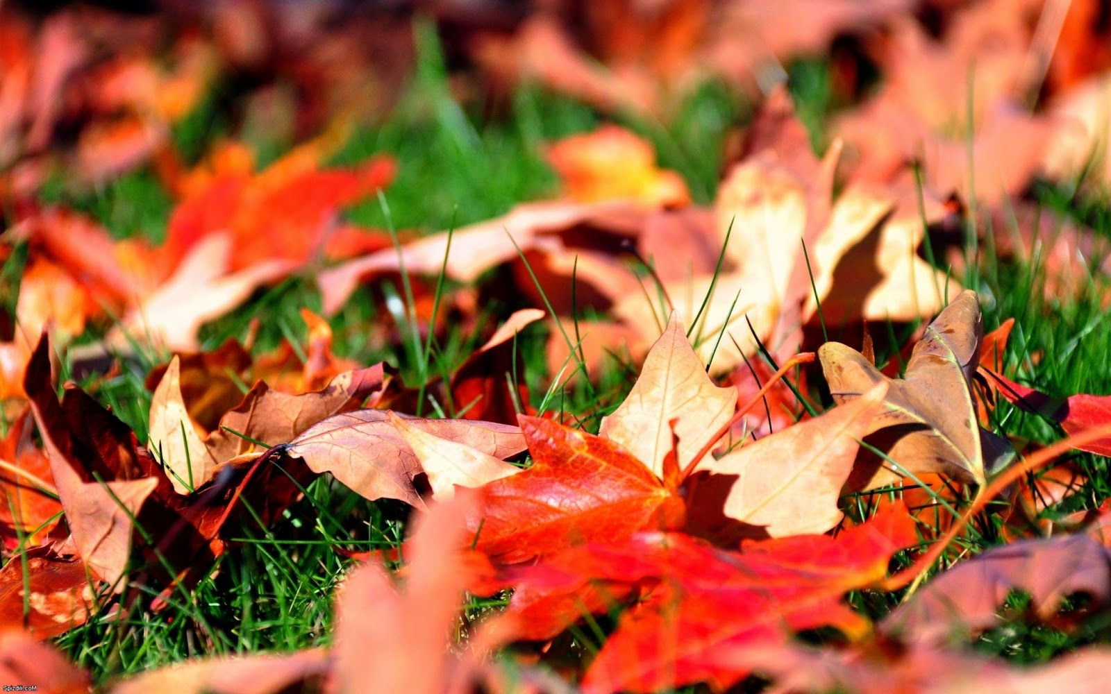 Leaf Wallpapers