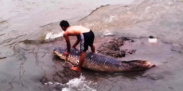 Heboh Warga Temukan Ikan Raksasa Di Danau Toba Saat Airnya Surut