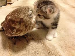 gambar burung dengan kucing