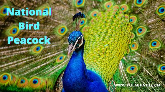 मोर मयूर पर कविता | Peacock Poem In Hindi