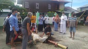 Teladani Nabi Ibrahim Keluarga Basuki - Mutholib Kurban 1 Ekor Sapi di Jaton