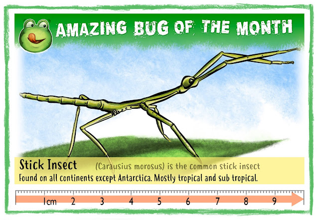 Graphic illustration of stick insect on Bug Belly website