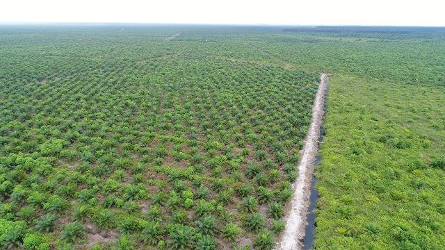 Tiga Pabrik PTPN VI Jambi Ditutup Gara-gara Kebocoran Rp 91,6 Miliar