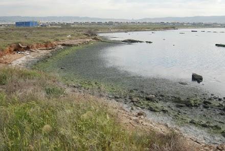 Ανησυχία για τη ρύπανση του Θερμαϊκού στην ακτή Καλοχωρίου