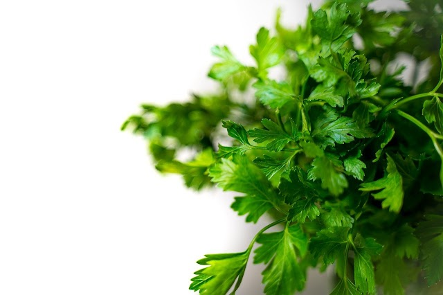 34 benefits of eating Coriander