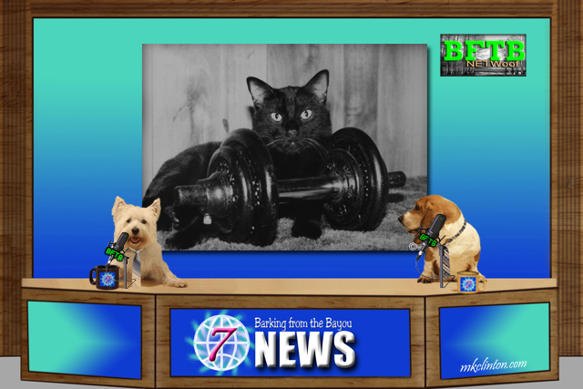 BFTB NETWoof News with two dogs anchorinng