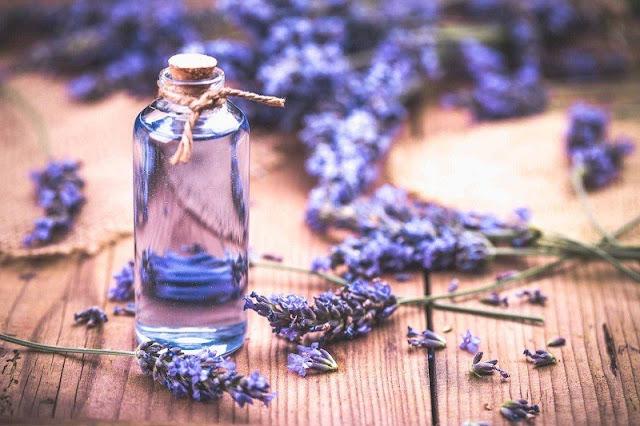 7 công dụng chữa bệnh của tinh dầu oải hương
