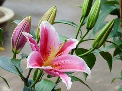 lua chon hoa ly dep