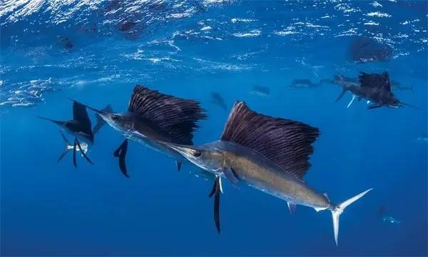 ماهو اسرع حيوان بحري