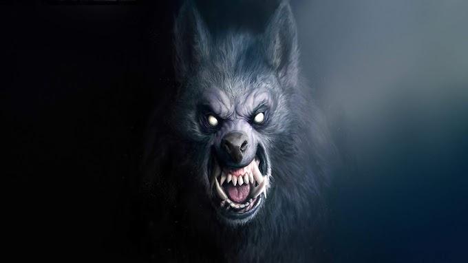 Papel de Parede Lobo Mau