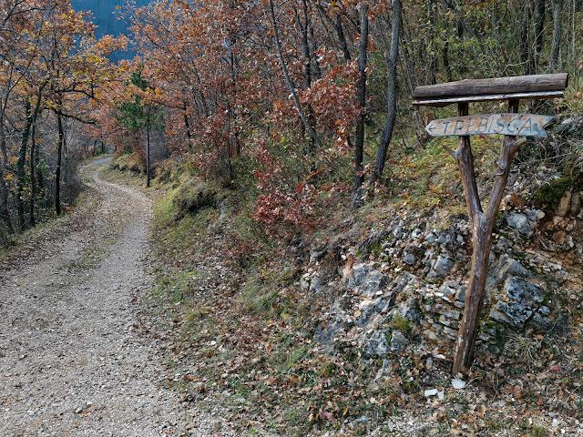 Šumski put prema Trebišća iz Sučića