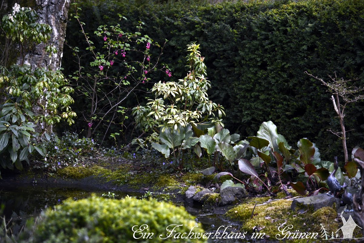 Gartenteich, Gartenblog