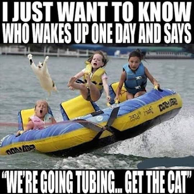 Lets bring the cat..