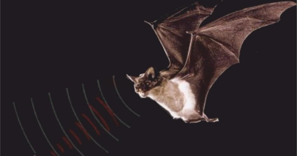 картинки темных пещерах ориентируются в полете с помощью считали, что такие