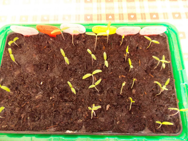 Résultats des premiers semis de printemps : succès et échecs