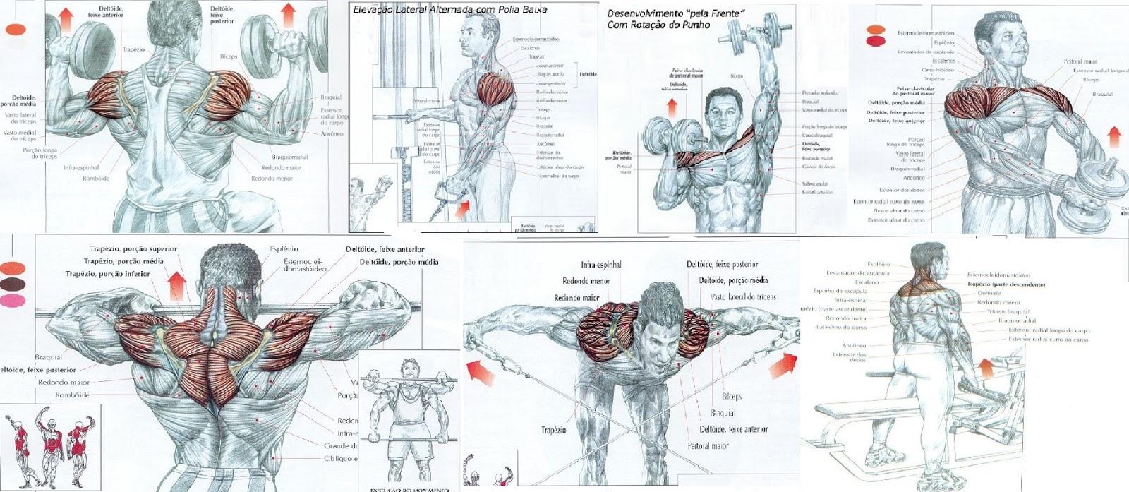hipertrofia muscular por uso de esteroides