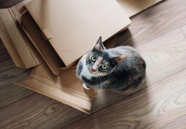 7 Ciri Kucing Sakit dan Harus Dibawa ke Dokter Hewan