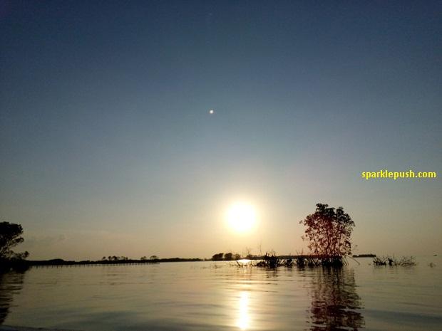 Berburu Sunset di Hutan Mangrove Kaliwlingi Brebes