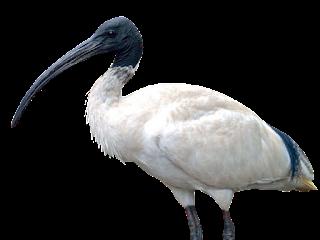 Bird PNG Transparent Photo Download Free