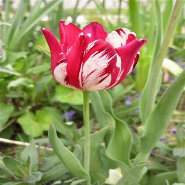 7 loài hoa đắt nhất thế giới, giá bằng cả căn biệt thự, loại đầu tiên có tiền cũng không mua được