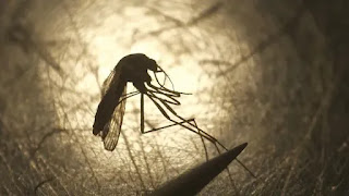 China was certified as malaria-free by WHO
