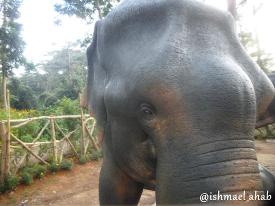 Elephant in Baguio Botanical Garden