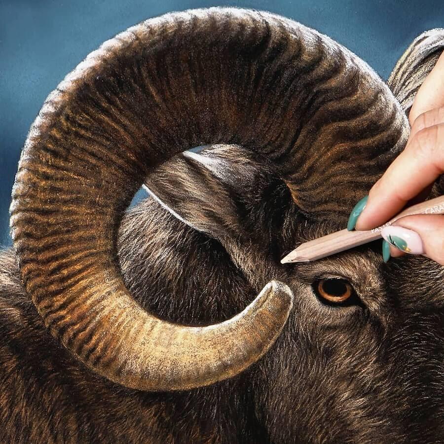 04-Bighorn-sheep-Julia-Dubinina-www-designstack-co