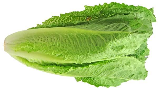 Romaine Lettuce Sangat Cepat Untuk Menurunkan Berat Badan