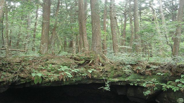 Ada dua gua di Aokigahara, Ice Cave dan Wind Cave