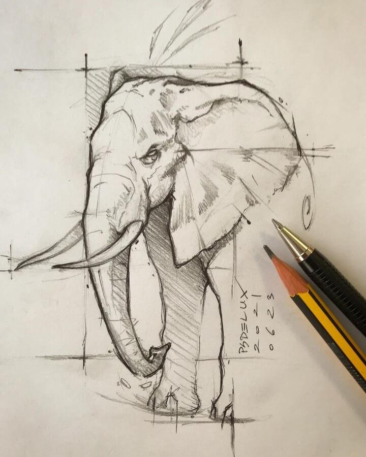 06-Elephant-Psdelux-www-designstack-co