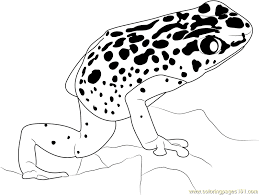 Blue Poison Dart Frog Coloring Pages Online For Kids