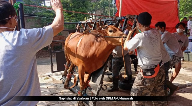 Inovasi Alat Perebah Sapi Buatan DKM Al-Ukhuwwah
