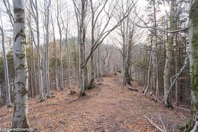 Bardzo przyjemna bukowa ścieżka między Małym Wołowcem a Wołowcem