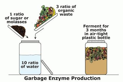 Cara Membuat Eco Enzyme dengan Memanfaatkan Sampah Organik Dapur