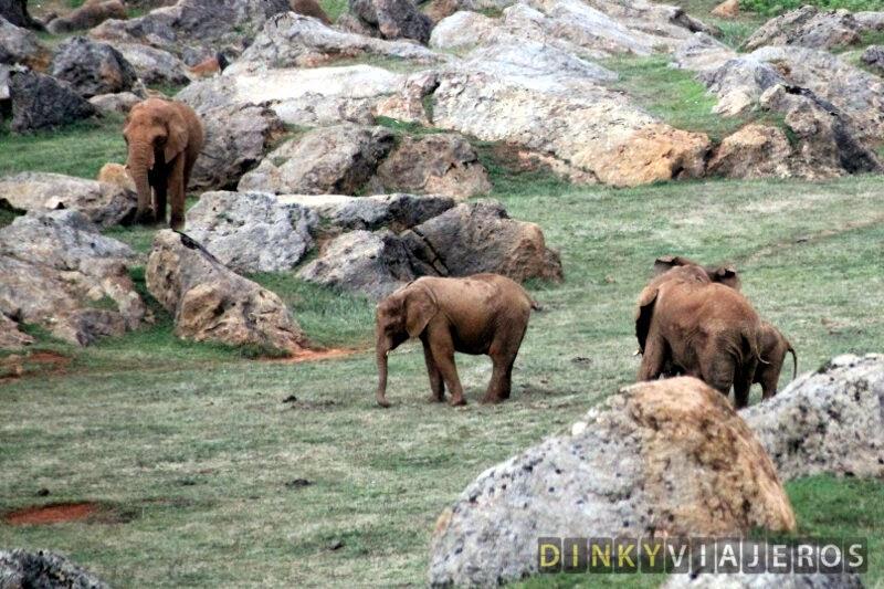 Parque de la Naturaleza de Cabárceno. Elefantes