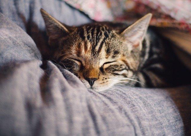 cara mengatasi kucing muntah muntah