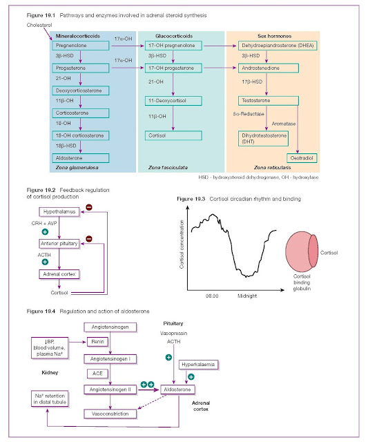 Steroid Physiology and Biochemical 19 Assessment