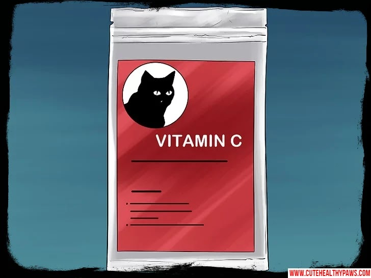 How to treat cold in cats