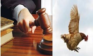 القاضي والدجاجة