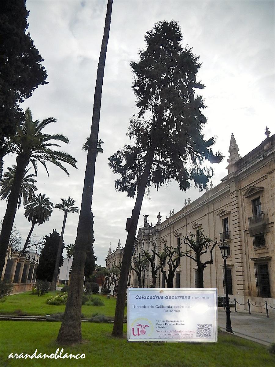 Plataforma ciudadana parques y jardines sevilla un jard n for Cabalgata ciudad jardin sevilla 2016