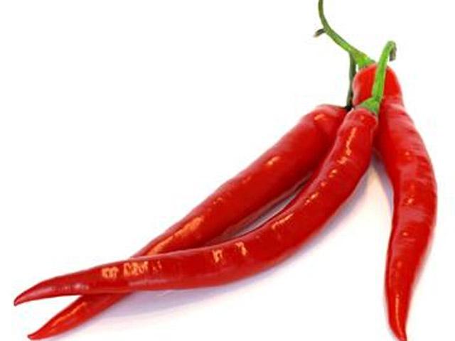 the cayenne pepper salah satu cabai paling pedas