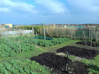 Allotment Growing - Winter