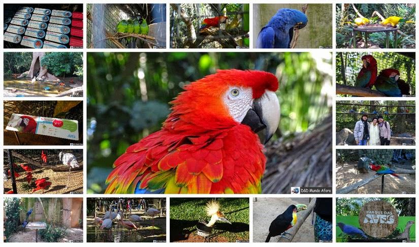 O que fazer em Foz do Iguaçu - Parque das Aves