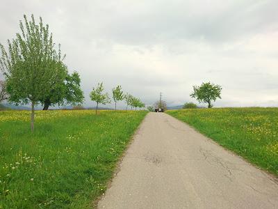 Feldweg die Hohe Flum hinauf. Mit einer Allee junger Bäume und Wiesen neben dem Feldweg.