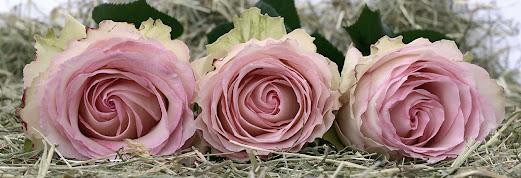 أحلى الورود ورق حائط 14