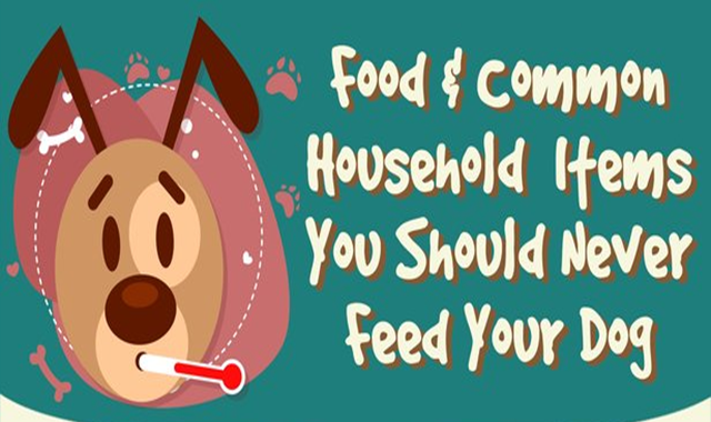 Food & Common Household Items You Should Never Feed Your Dog #infographic